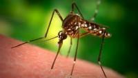 Komary - jakie są naturalne sposoby na ich odstraszenie?